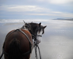 Clydesdale on the Barrytown beach near Punakiki.