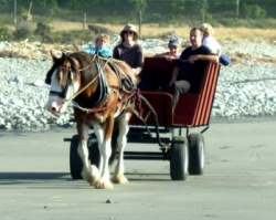 Barrytown Horse and Wagon tours on a New Zealand beach