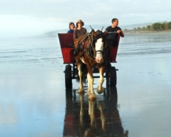 NZ horse and wagon on a West Coast beach.Barrytown, near Punakaiki